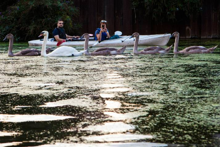 london-incognito-bespoke-events-kayaking-on-londons-oldest-canal-passing-swans